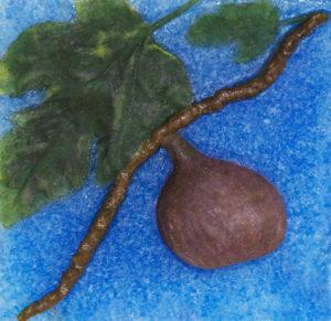 """Ficus Carica (Fig) """"Violette de Bordeaux"""""""